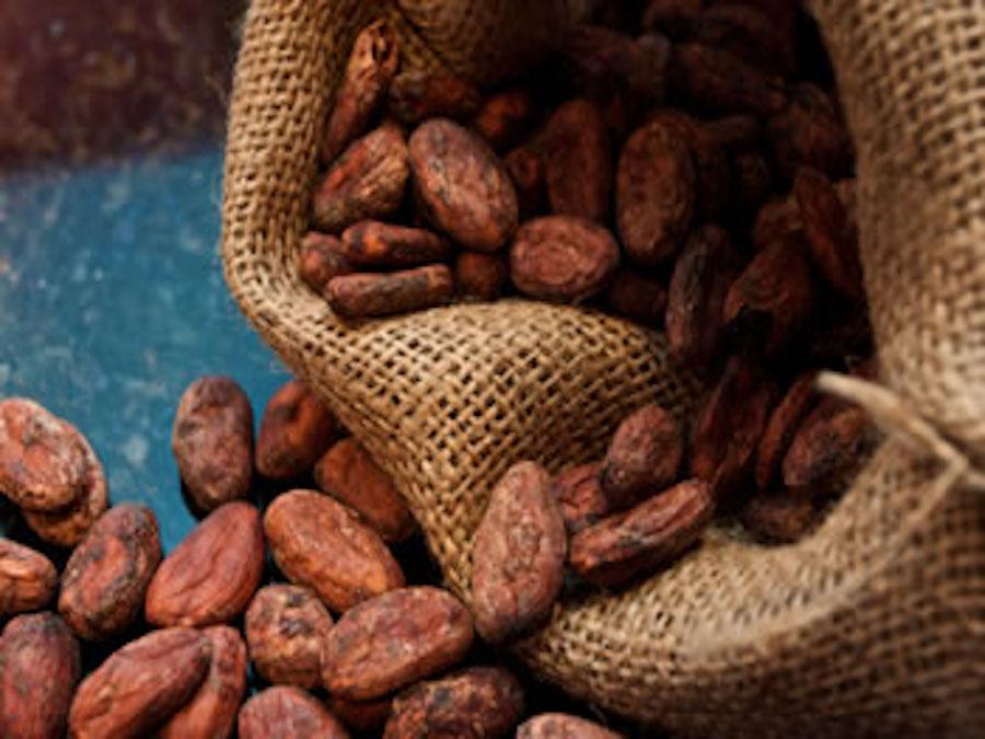 Cacao, prezzi in calo: pesano i dati del Nord America