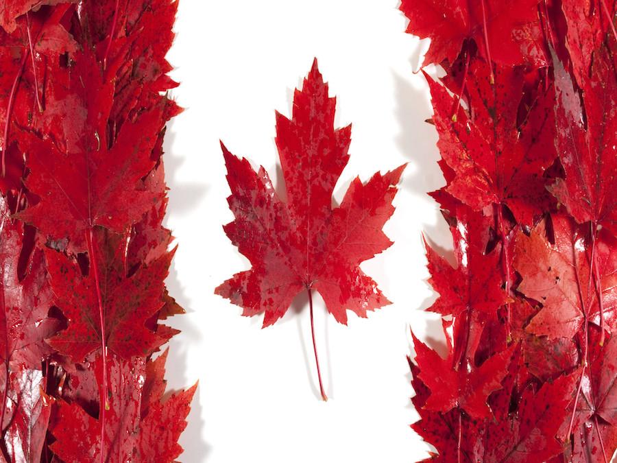 Canada: ridotte le proiezioni sulle semine di Grano