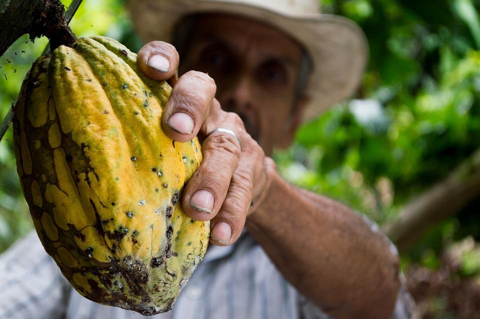 Cacao, Grinding: positivi i dati del Nord America
