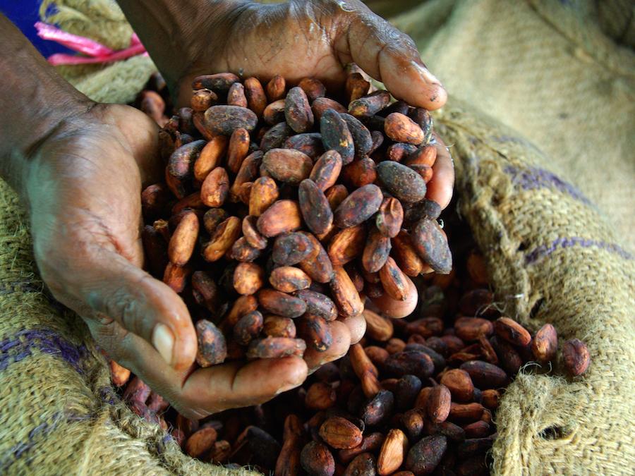 Cacao, Nigeria: acquisti a passo di lumaca