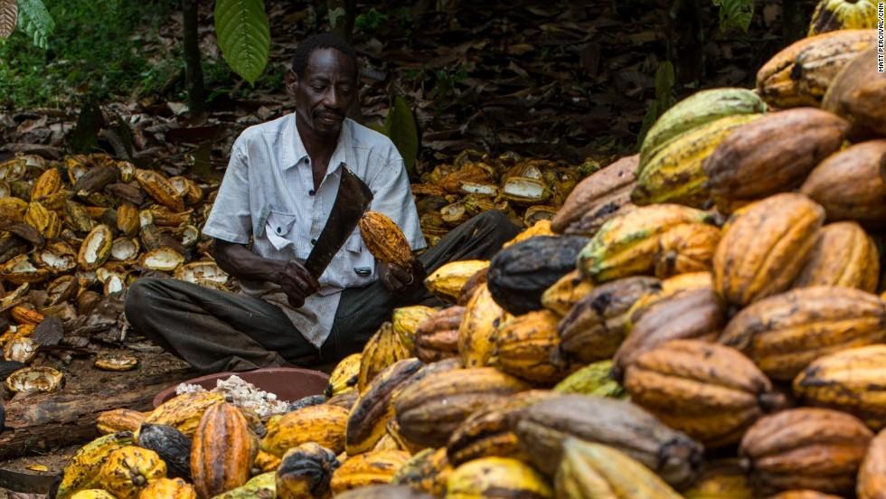 Cacao. I coltivatori sono sul piede di guerra