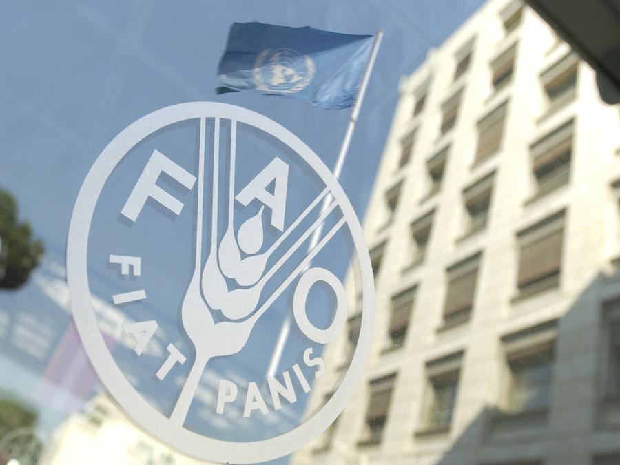 Cereali, FAO: mercato in surplus