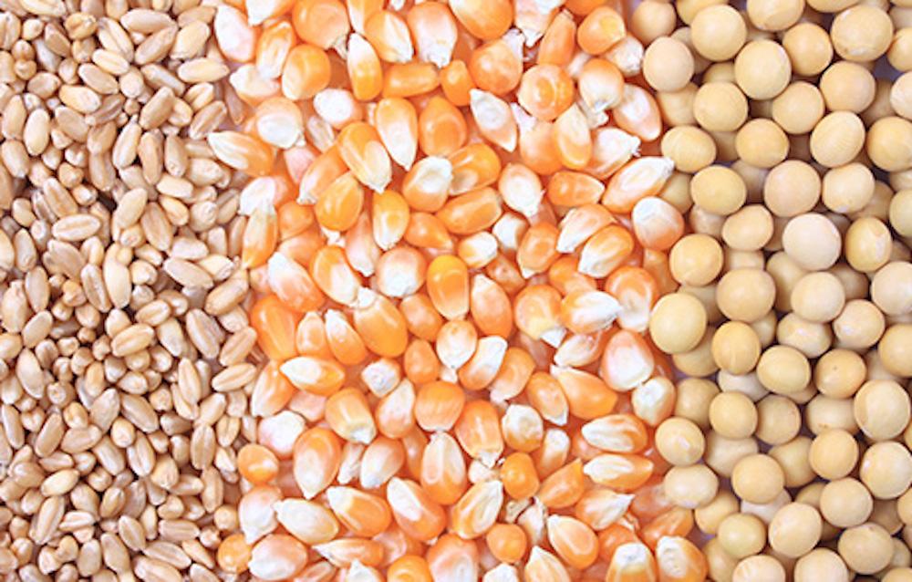 Speciale USDA: il Frumento crolla, ma la Soia fa felice i Tori