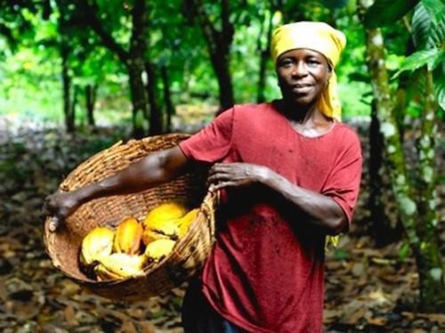 Cacao, Cameroon: coltivatori in fuga dalle piantagioni