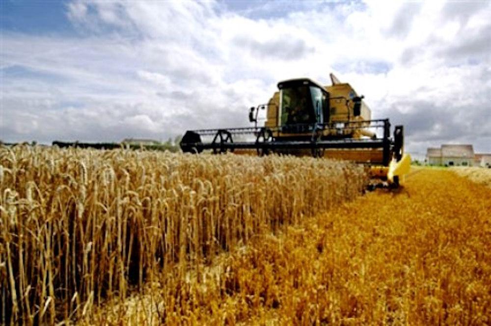 Frumento, Marocco: nel 2018 forte battuta d'arresto nel raccolto