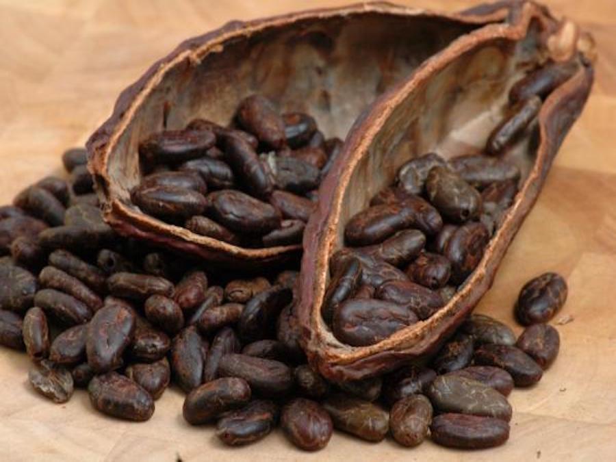 Cacao: il clima è ancora un problema