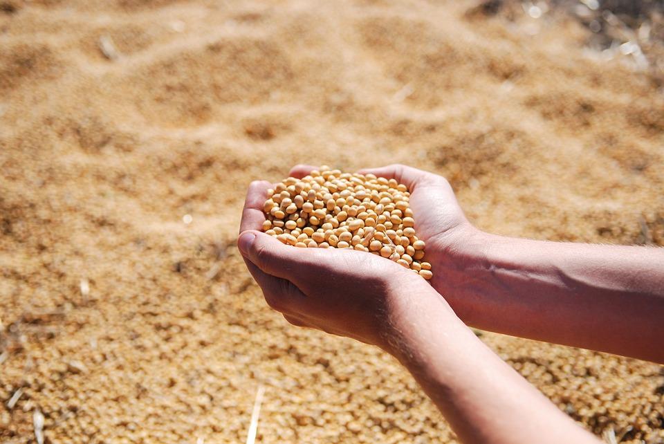 Soia, Argentina: il clima deprime i raccolti