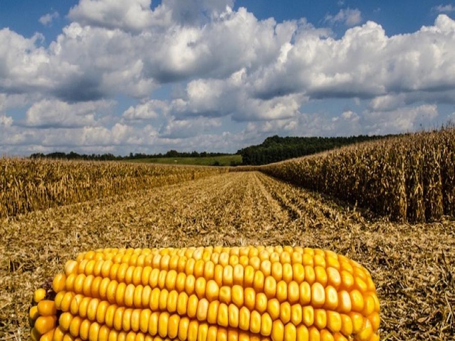 Mais: avanzano le semine negli USA