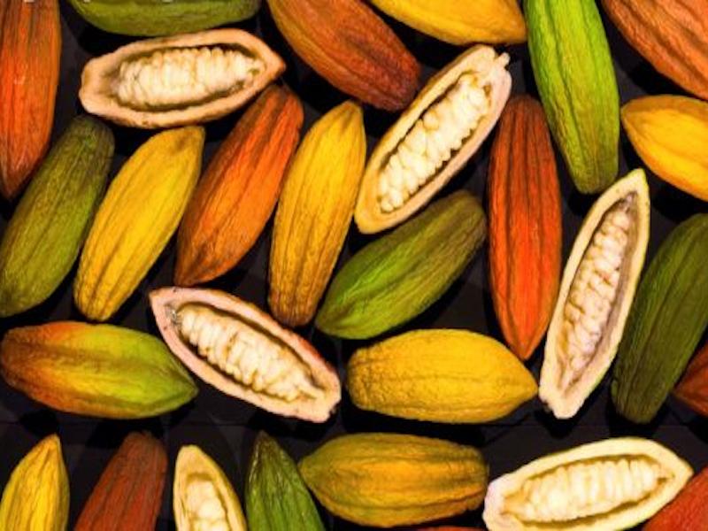Cacao, speciale Venezuela: la nuova Peste? È il governo!