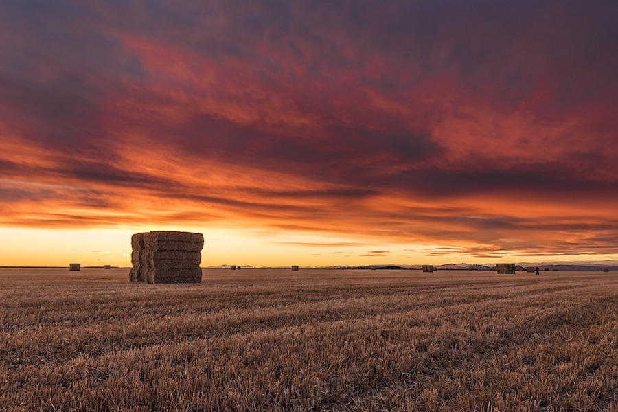 USA, Frumento invernale: acreage in diminuzione