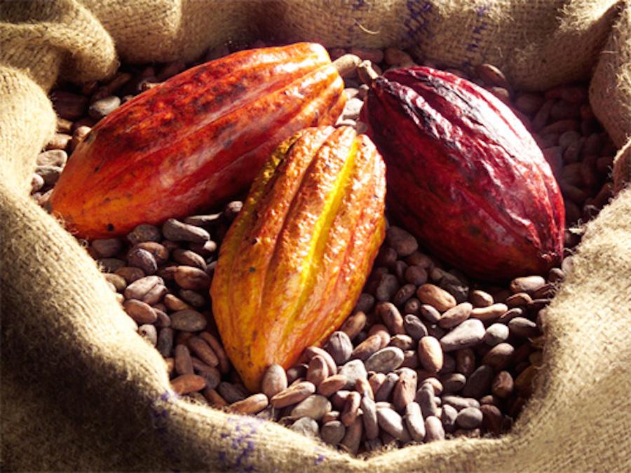 Cacao: in aumento il consumo in Nord America