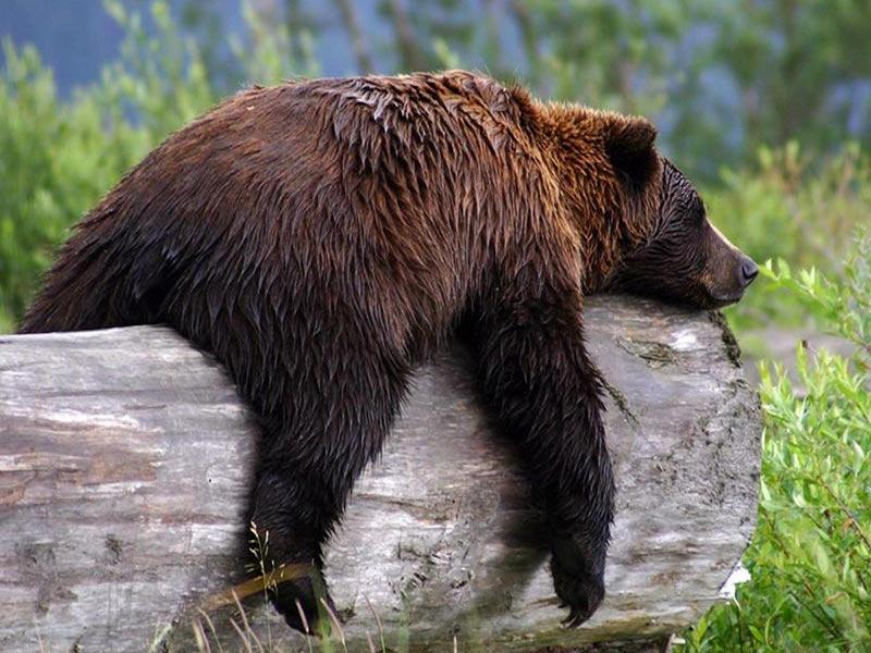 Petrolio: gli Orsi sono in letargo?