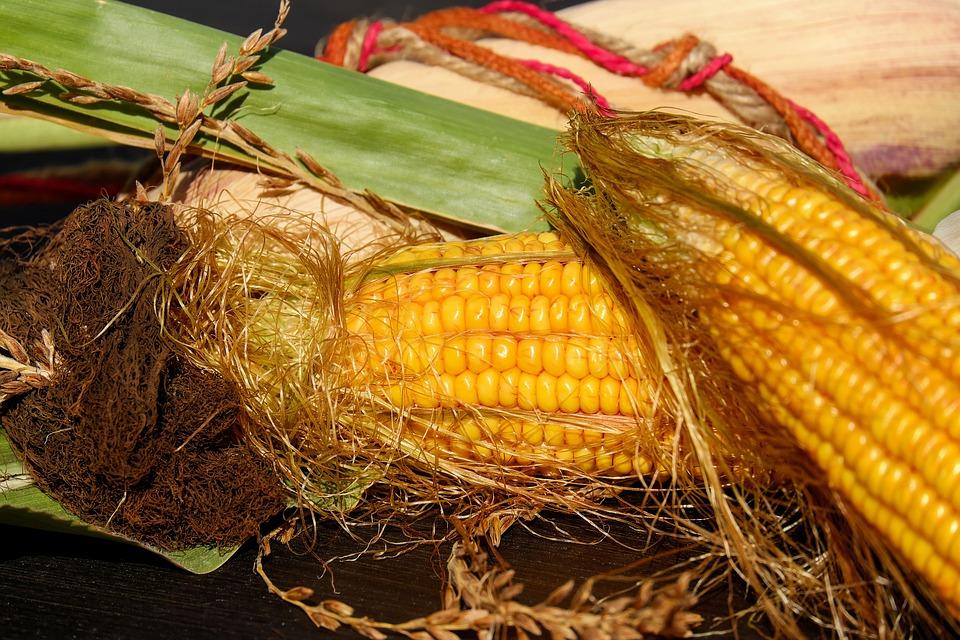 Speciale Mais, USA: USDA riduce scorte di fine stagione
