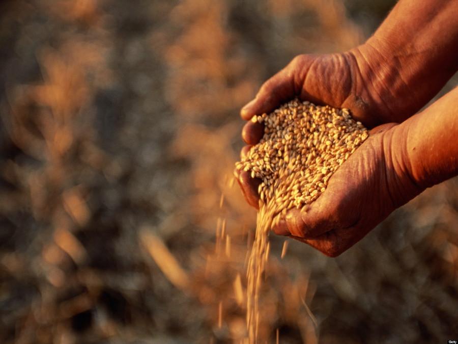 Mais, IGC: produzione globale in aumento, ma il Frumento…