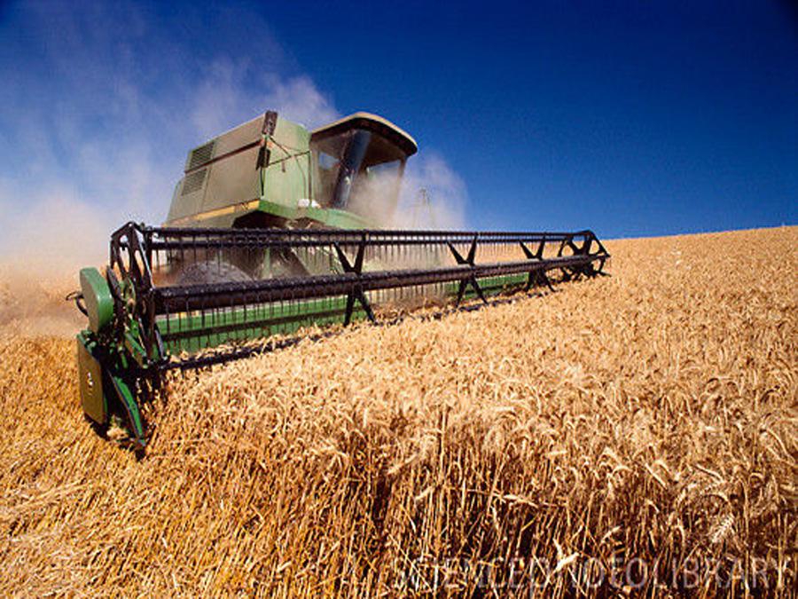 Speciale Frumento: produzione e consumo in calo, scorte limitate