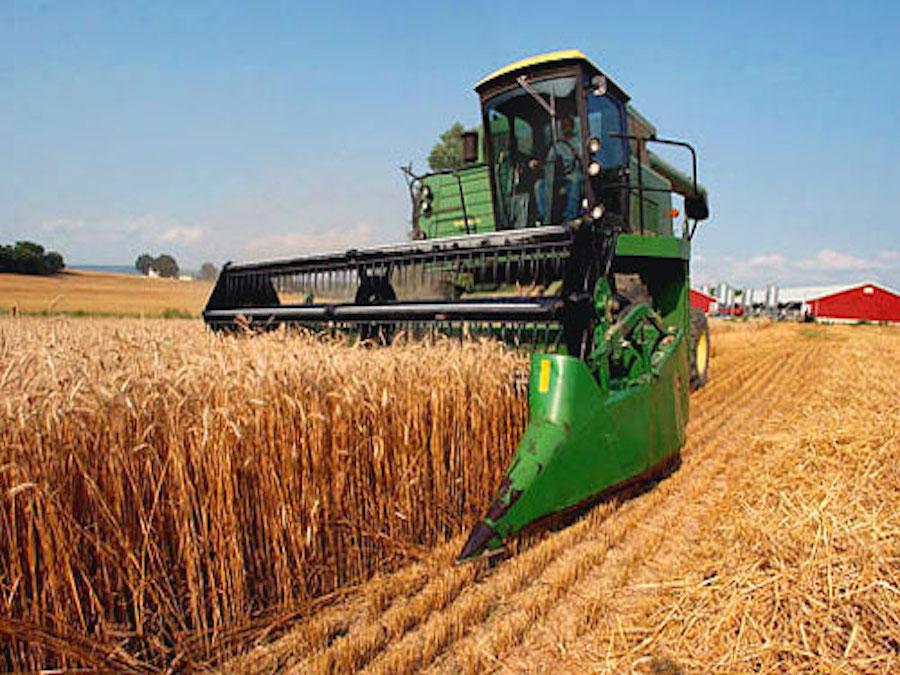 Cereali, Russia ed Ucraina sulla cresta dell'onda con il clima
