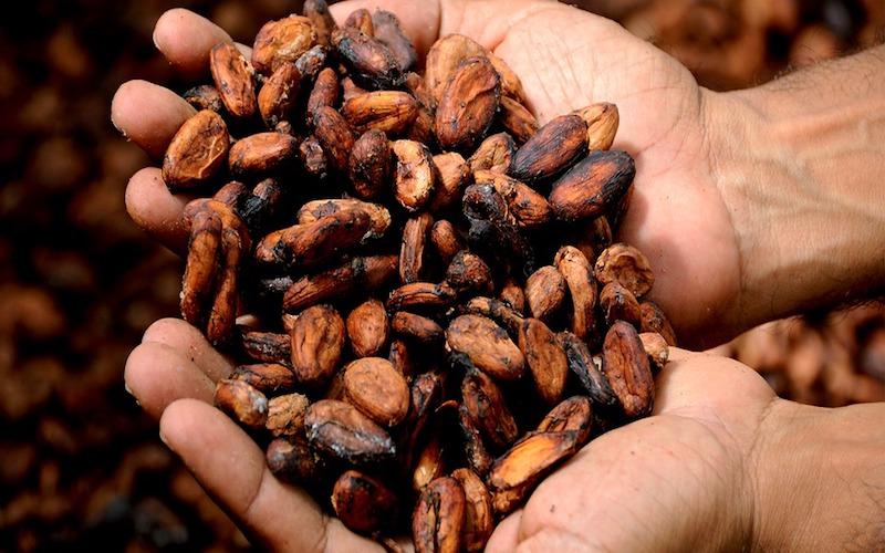 Cacao, la domanda è debole: drammatico aumento delle scorte in Costa d'Avorio
