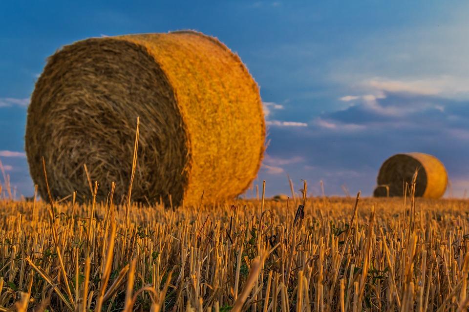 Frumento, Mais e Soia: i prezzi sono alle stelle, timori per inflazione alimentare
